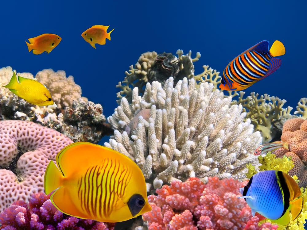poisson mer des philippines