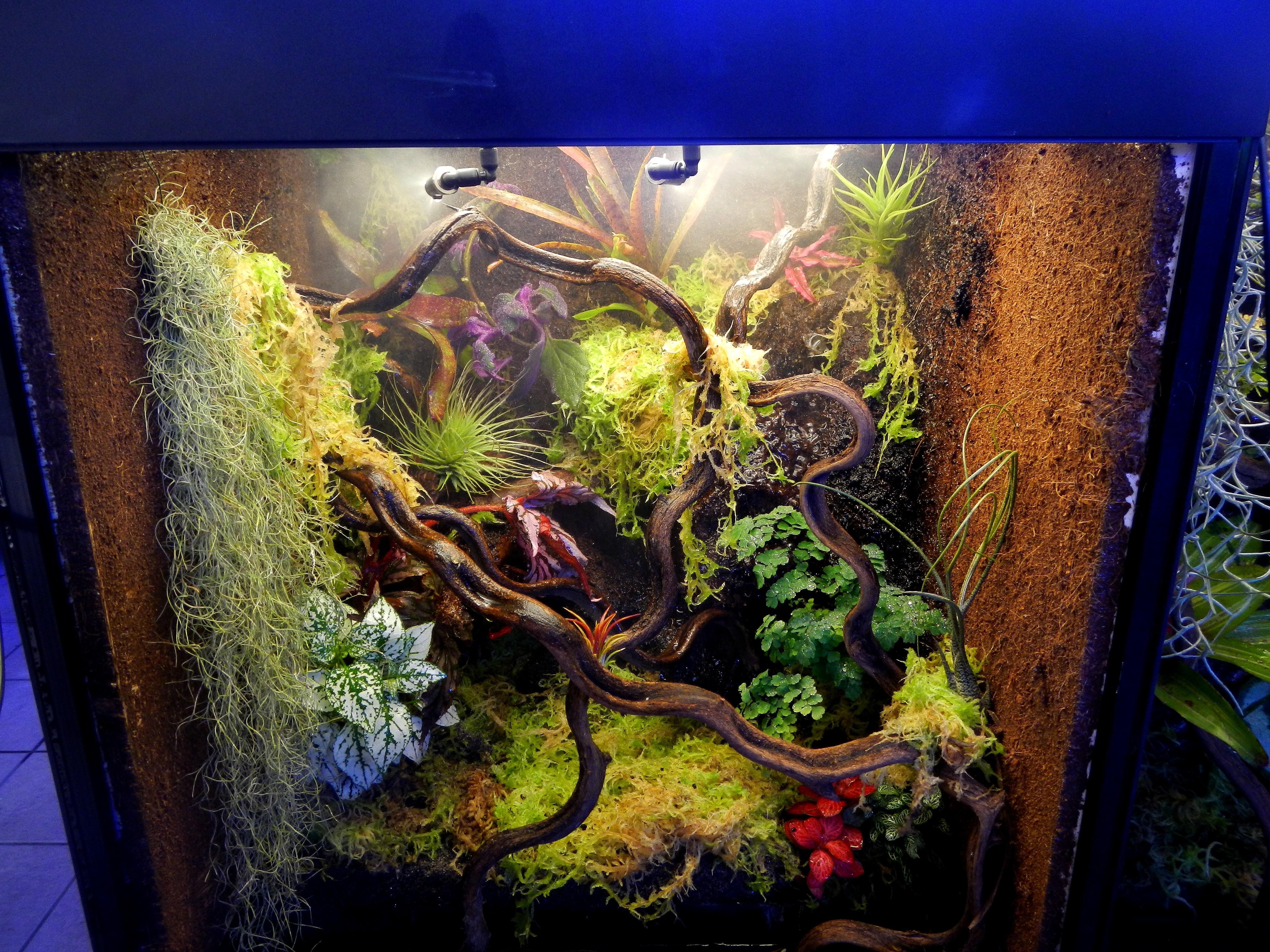 deco tropic terrarium for t tropicale. Black Bedroom Furniture Sets. Home Design Ideas